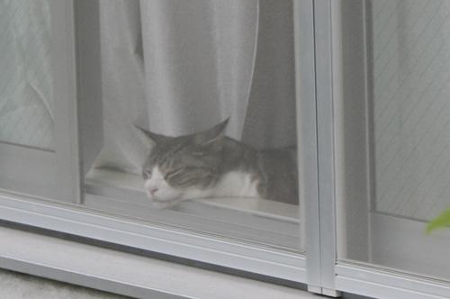 cat-kiyosumi.jpg
